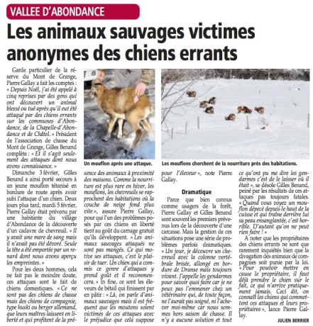 2013 02 19 chiens errants