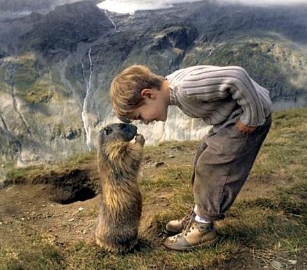 2013 04 16 marmottes